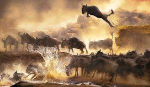Masai-Mara-Game-Reserve1